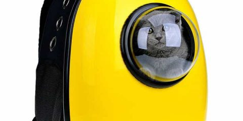 airline-approved-pet-carriers