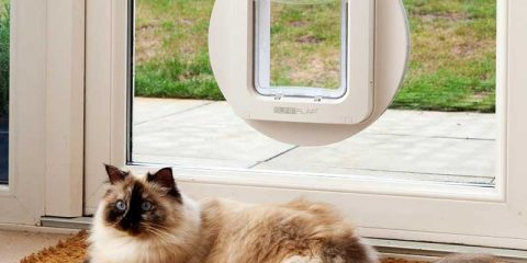 microchip-pet-door