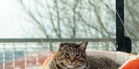 Cat-Hammock