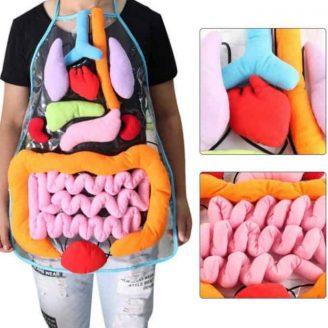 body organ apron educational toy.jpg