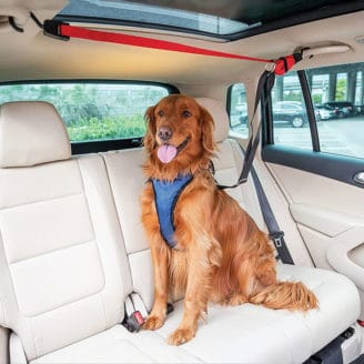PetSafe-Happy-Ride-Zipline-Dog-Harness
