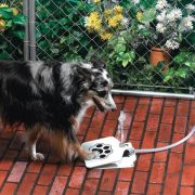 Automatic Pet Dog Water Fountain