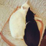 Slice of Bread Cat Bed